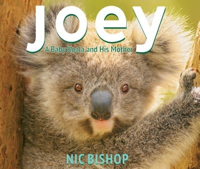 Scholastic Press Joey: A Baby Koala and His Mother
