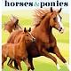 DK Children Horses & Ponies
