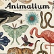Big Picture Press Welcome to the Museum: Animalium