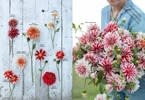 Chronicle Books Floret Farm's Discovering Dahlias: A Guide to Growing and Arranging Magnificent Blooms