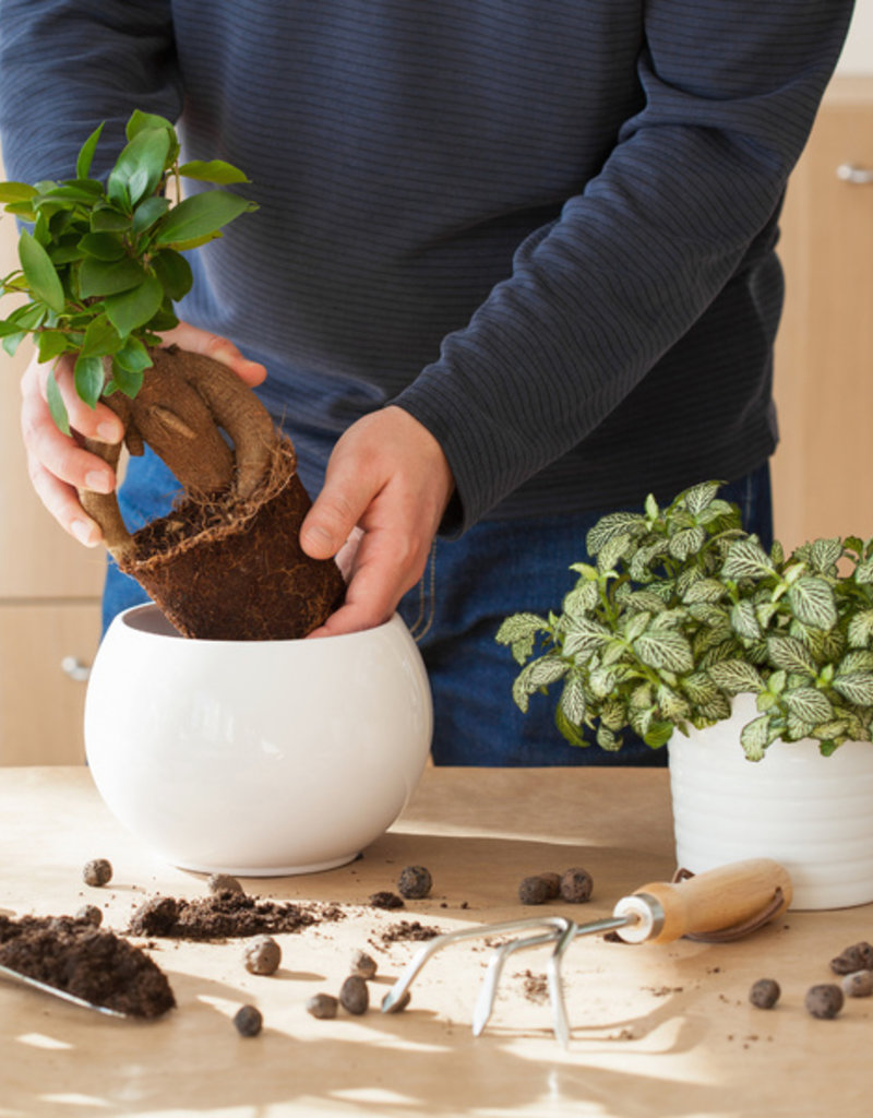 Class:  March 1st  - Houseplants 101