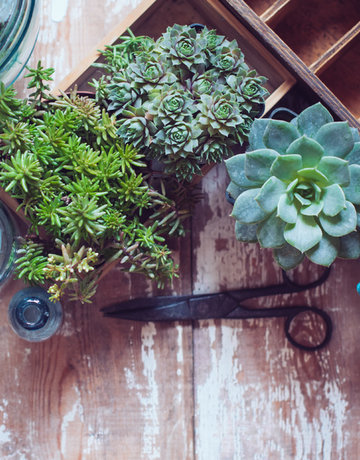 Class:  February 9th - Cactus and Succulent Garden