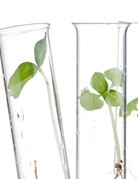 Class:  March 29th - Creating Self-Watering Planters with Glass - Price TBD