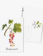 Oana Befort - Redcurrant Postcard