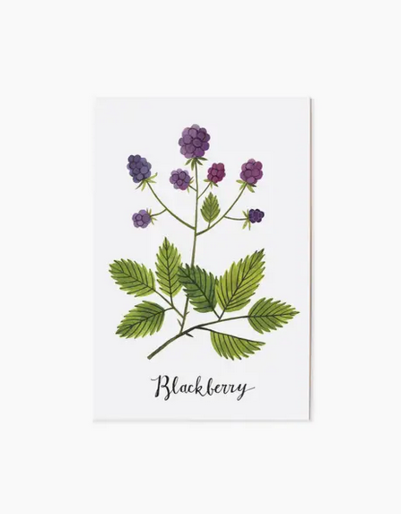 Oana Befort - Blackberry Postcard