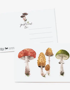 Oana Befort - Mushroom Study Postcard