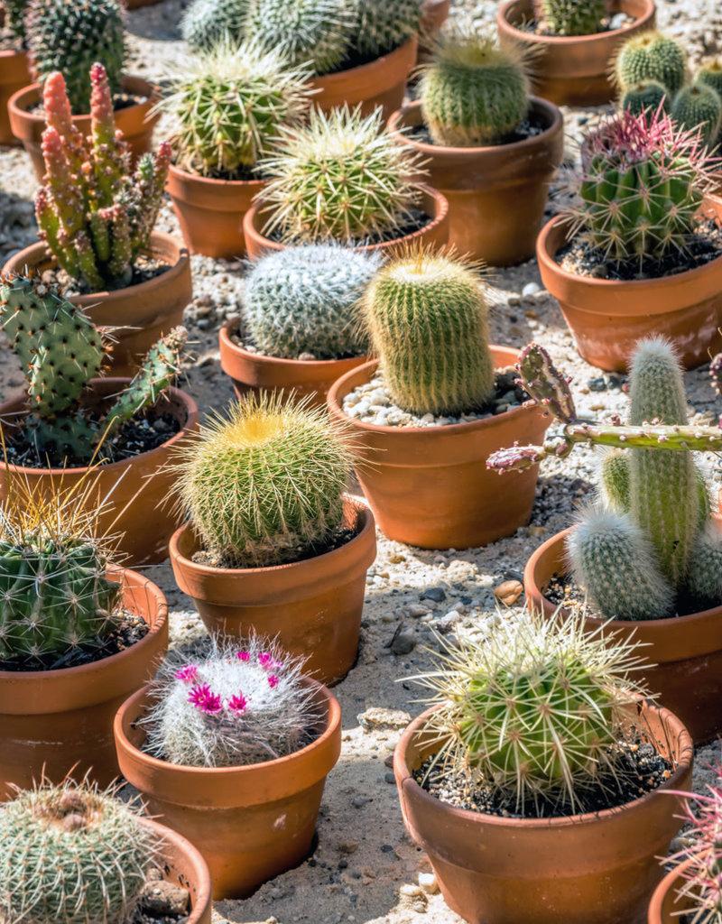 "Plant - 4"" - Cactus Pot Assorted"