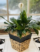 "6"" Assorted Foliage in Sqaure Basket with Metal Accents"
