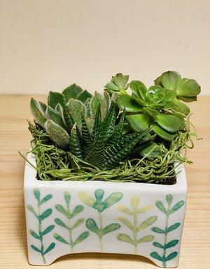 MINIATURE Succulent Garden in MINI Angus & Celeste Ceramic Planter
