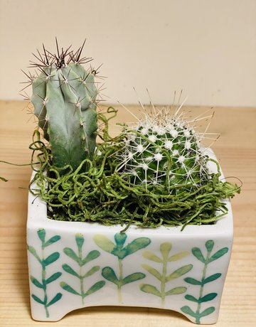 MINIATURE Cacti Garden in Angus & Celeste MINI Ceramic Planter