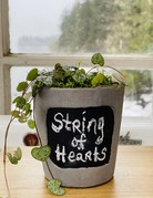 "4"" String of Hearts in Cement Chalkboard Planter"
