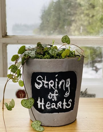 """4"""" String of Hearts in Cement Chalkboard Planter"""