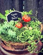 Plant Garden - Seasonal