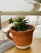 Mini Succulent in Tiny Teacup with White Base