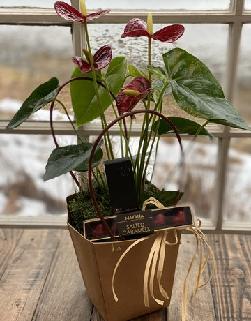 Anthurium in a Gift Bag - Please Specify Color -