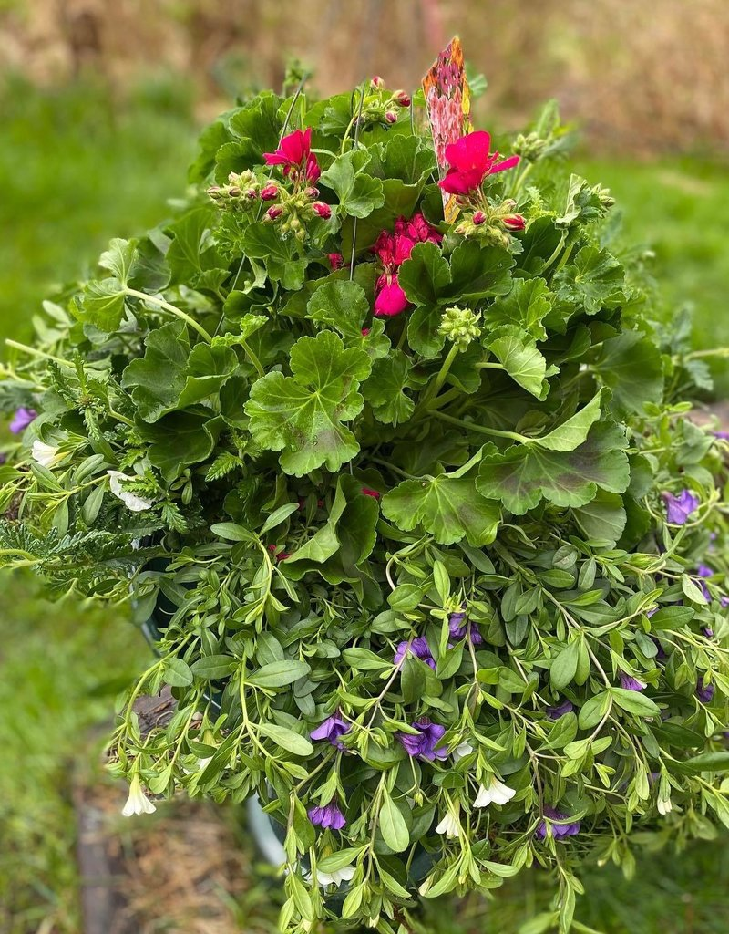 "Plant - 12"" - Hanging Combo Basket - Assorted"