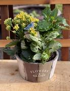 """7"""" Plant Garden in Wooden Planter"""