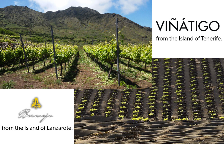 THURSDAY 28 MARCH | Canary Islands Tasting Seminar w/Juan Silverio from Viñatigo & Ana de Leon from Los Bermejos - Spain