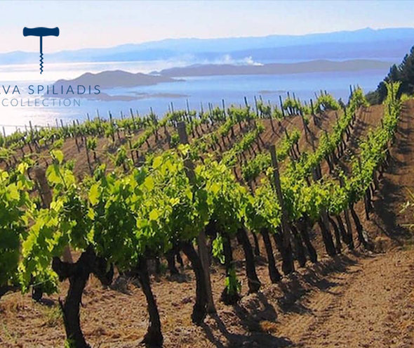 FRI 06 SEPT | Explore Greek Wines during a Tasting Seminar with Frankie Saunders - Greece
