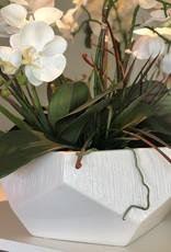 Symphonie Large Orchid