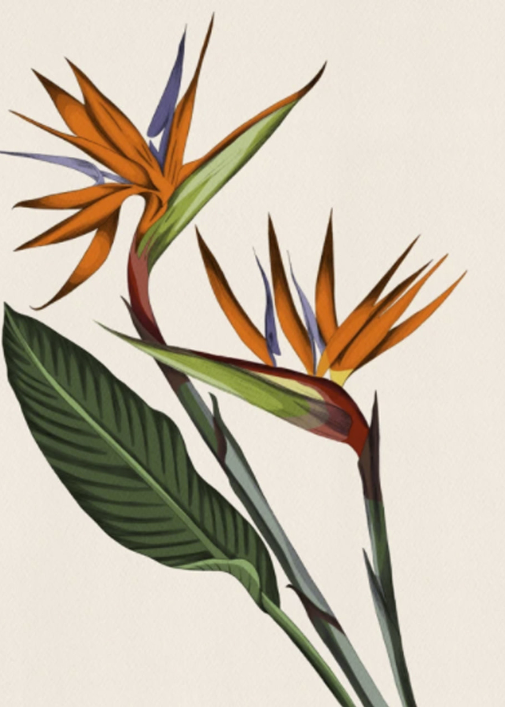 Mayan Llanera Illustrations MANU PELEKAIKO PRINT 8X10