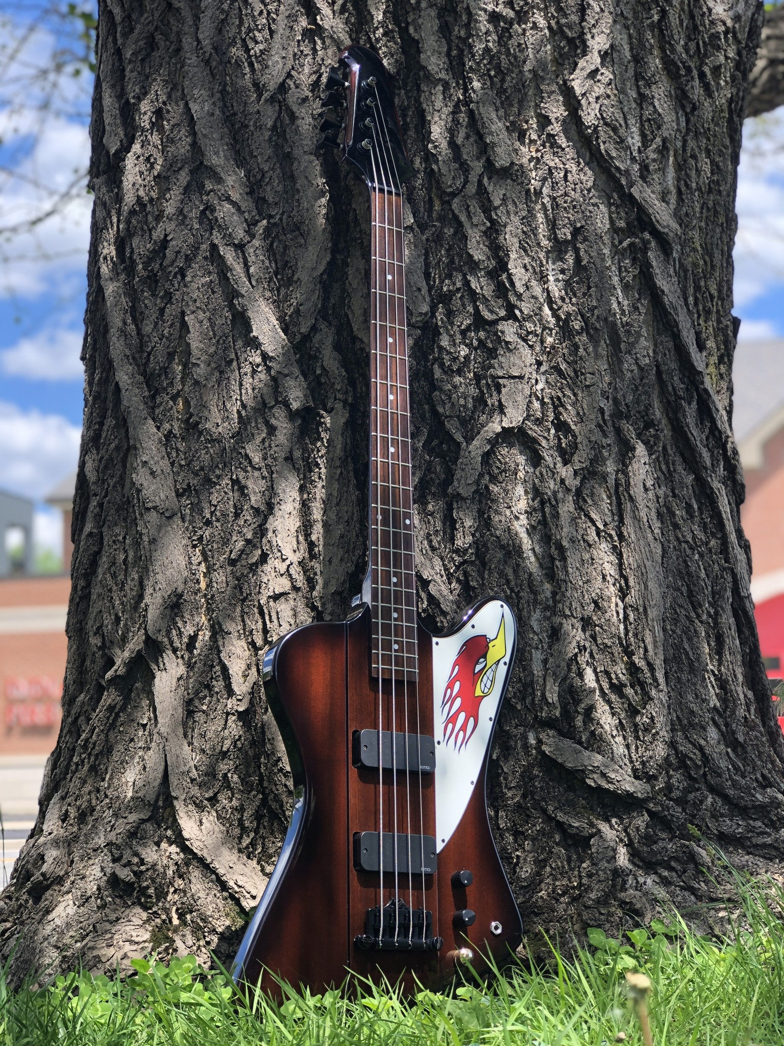 "Epiphone Thunderbird Bass ""The Pecker"" w/ EMG pickups-1"