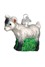 Old World Pygmy Goat