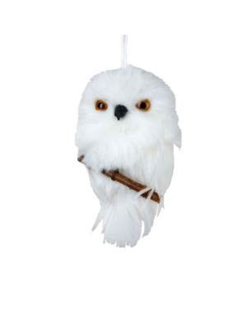 White Owl on Branch