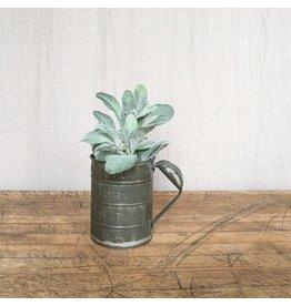 New Soft Green Sage-Like Stem