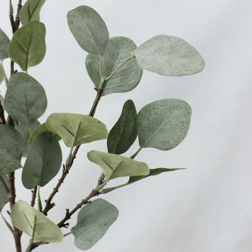 Eucalyptus Twig