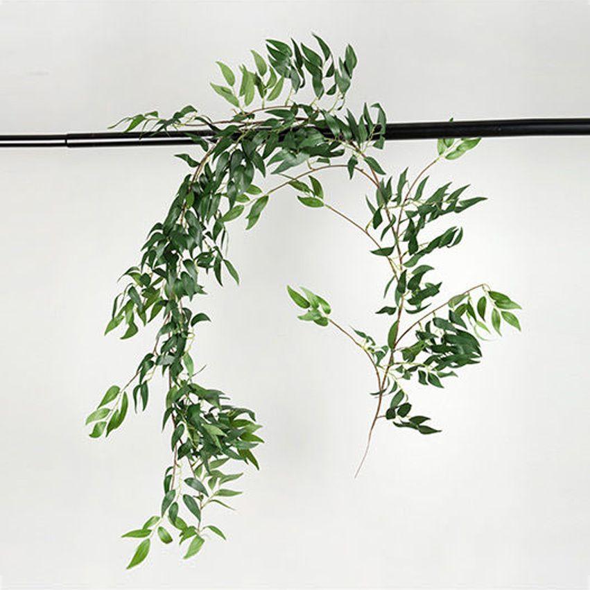 New Willow Vine