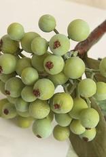 Bacca Fruit Berry Stem