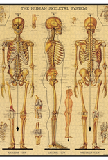 Vintage inspired Puzzle - Skeletal System