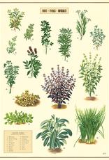 Poster - Kitchen Herbs