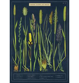 Poster - Grasses + Sedges