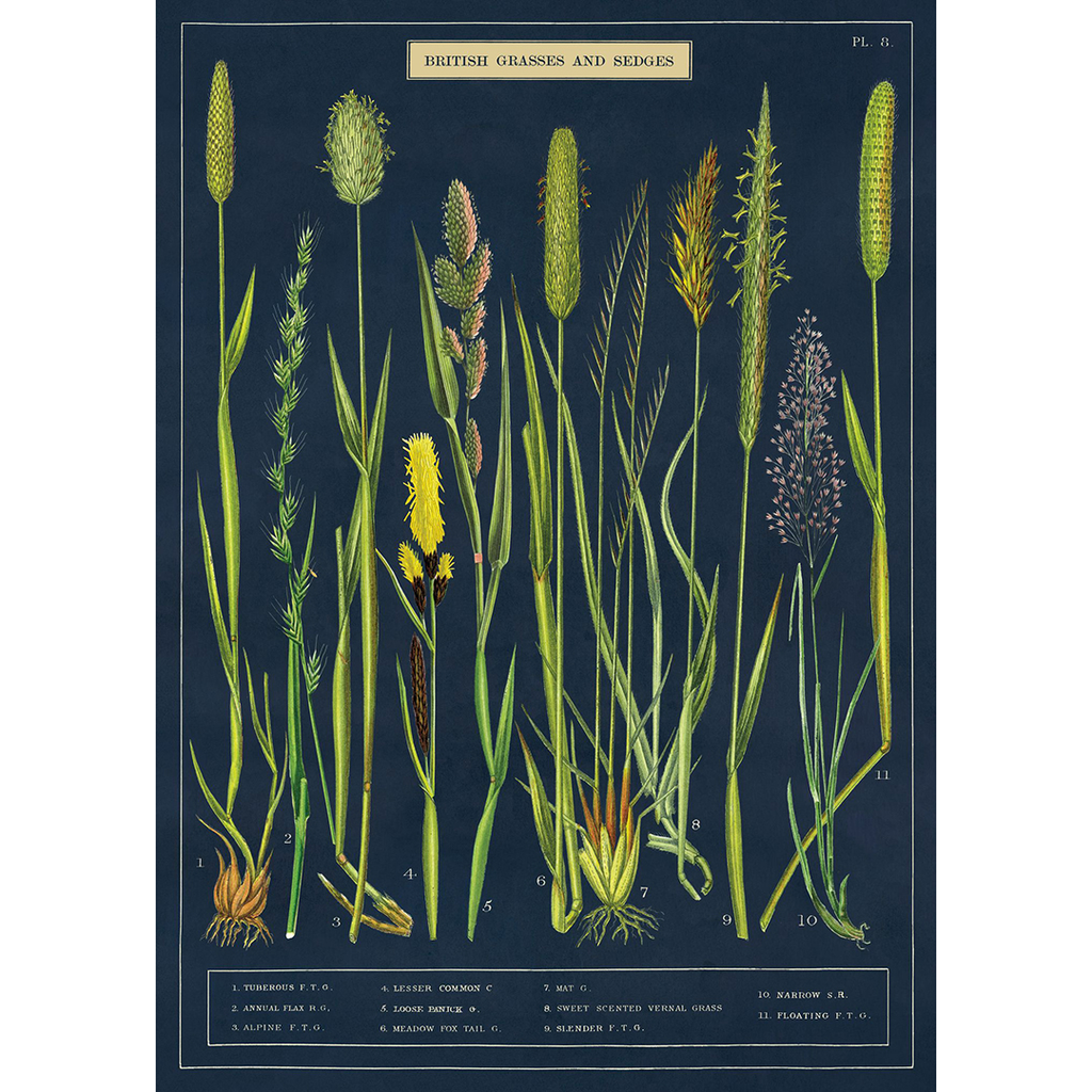 Poster - Grasses + Sedges