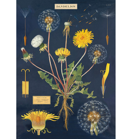 Poster - Dandelion Chart