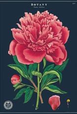 Poster - Botany Study