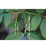 New England Seaweed Earrings - Tumbaga - Wire