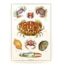 Crab Illustrated Card