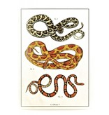 Snake Illustrated Card