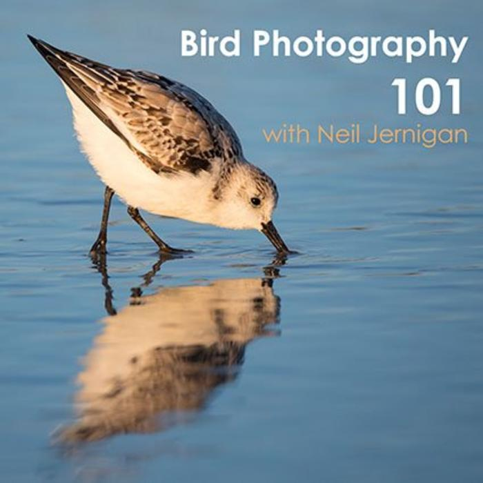 Bird Photography 101 Class (January 15, 2019)
