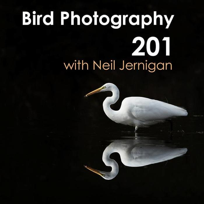 Bird Photography 201 (February 12, 2019)