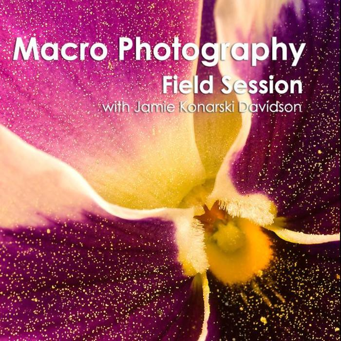 Intro to Macro Photography Field Session (March 2, 2019)