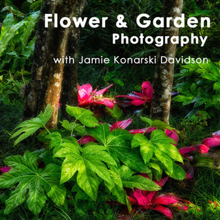 Flower & Garden Photography