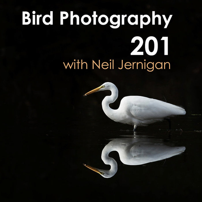 Bird Photography 201 Class (January 14, 2020)