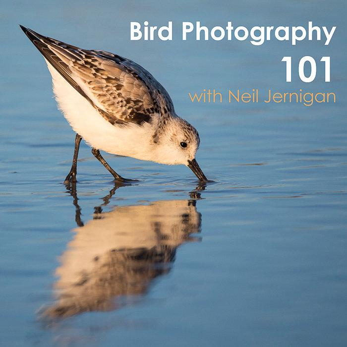 Bird Photography 101 Class (November 12th, 2020)