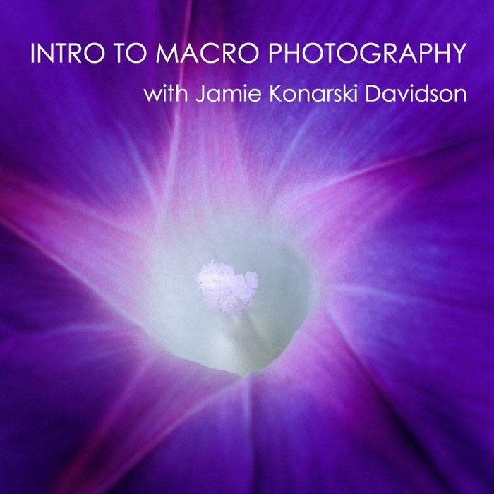 Intro to Macro Photography *Online* (July 27th, 2020)