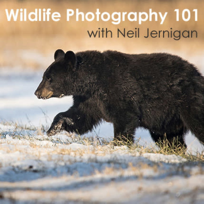 Wildlife Photography 101 - 2021 Dates Coming Soon