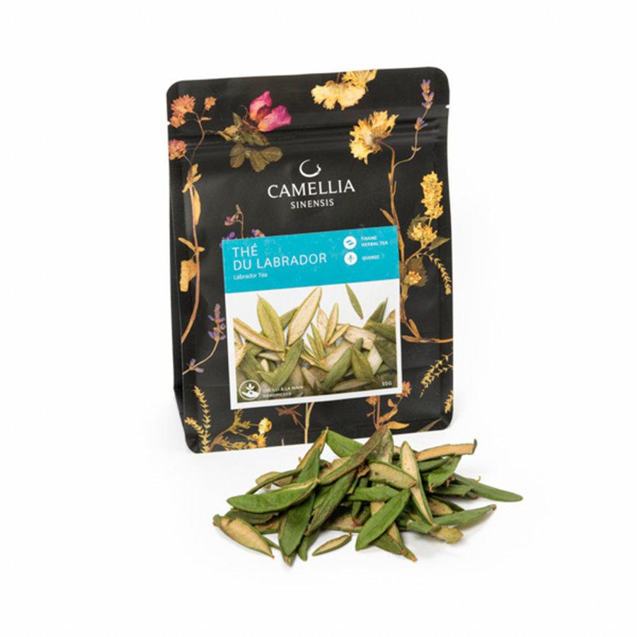 Camellia Sinensis Labrador Tea - Photo 0